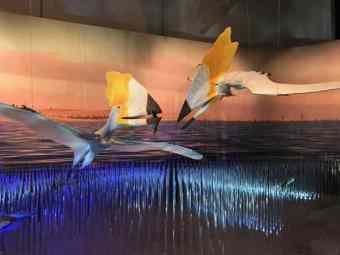 Fishing pterosaurs - Scientific name: Thalassodromeus sethi