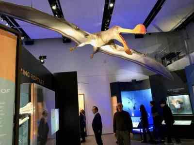 Keel Jaw Pterosaur - Scientific name: Tropegnathus mesembrinus