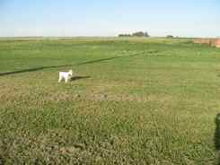 Mattie looks for Toto in Kansas