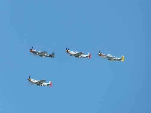 Mustangs in formation