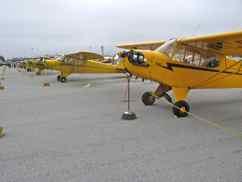 Piper J-3 Cub Row at Watsonville