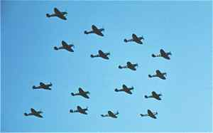 Sixteen Spitfires fly in formation at Duxford Airshow