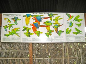 You have them for planes -- Here's an aerial identification chart for parrots!