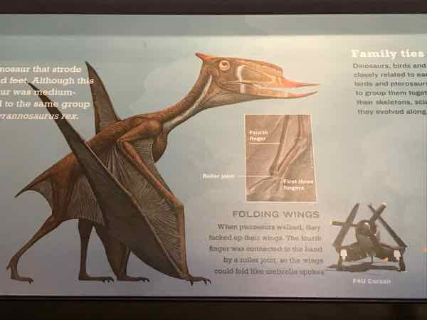 Pterosaurs walked with folded wings