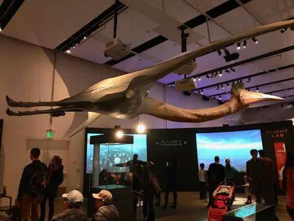 Pterosaur with 33 foot wingspan.  Scientific name: Quetzalcoatlus northropi
