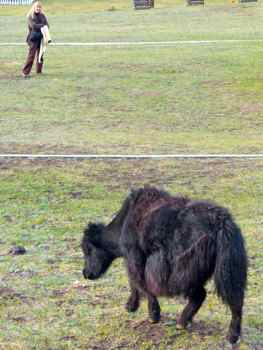 Even though the yaks in camp seemed pretty peaceful, we let them have the path.